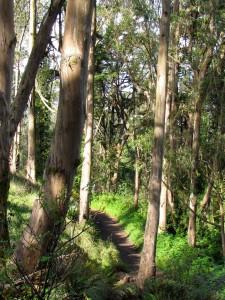 MtDavidsonTrees